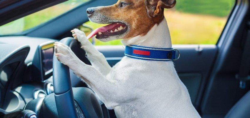 Hondvriendelijke Gites