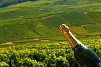 Champagne vineyard, France